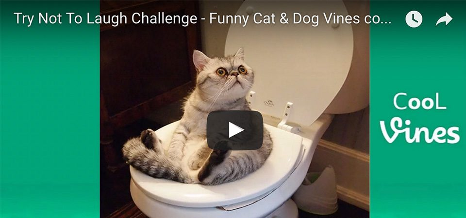 Cat & Dog video